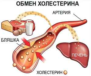 obmen-cholesterina
